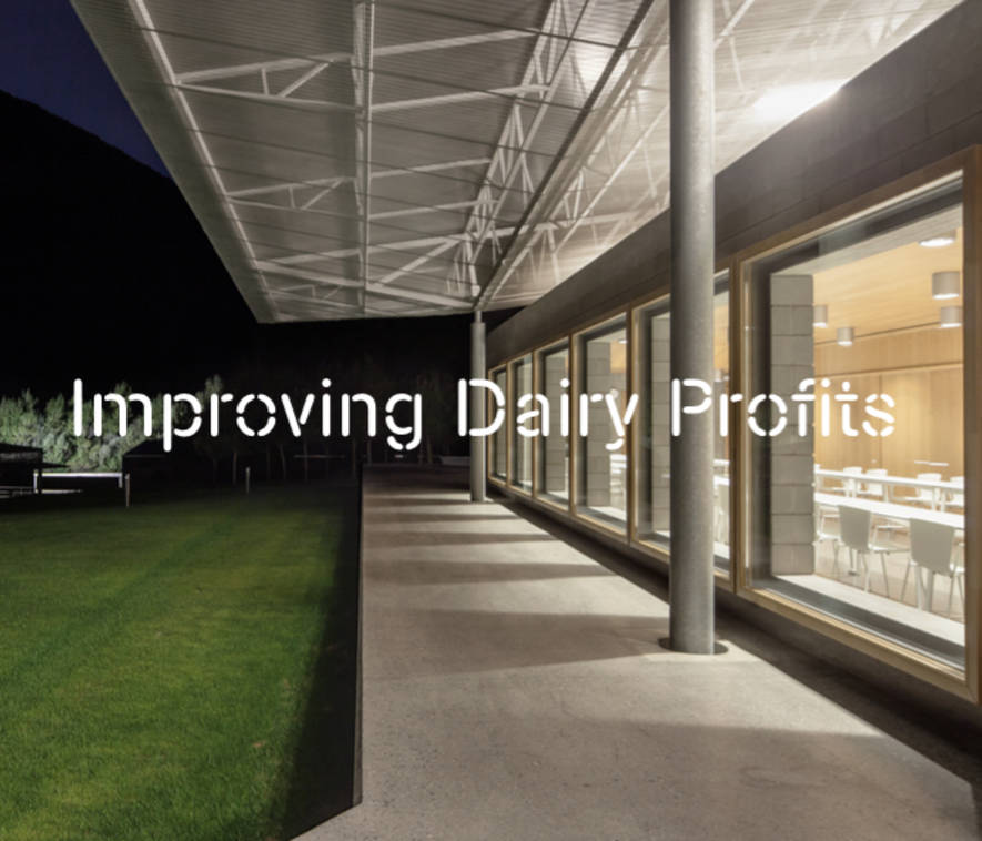 Fostering and improving dairy profits through nutrition and management | Blanca from the Pyrenees